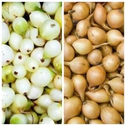 Tavaszi hagyma - sárga + fehér - 2 x 5 kg; zöld hagyma -