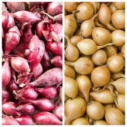 Tavaszi hagyma - sárga + piros - 2 x 5 kg; zöld hagyma -