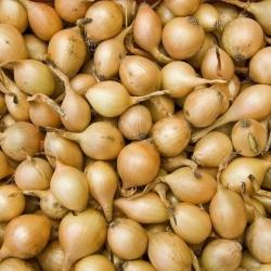 Пролећни лук - жути - 10 кг; млади црни лук -