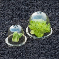 Mini kasvuhoone - kuppel - kaitseb taimi ootamatute ootamatute külmade eest - 33 x 31 cm - 3 tükki -