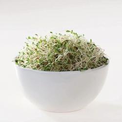 БИО семе за клијање - органско семе са сертификатом за вечерњу примору; сунцокрети, сундропс -
