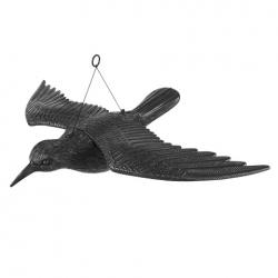 Burung gagak besar - terbang - 55 cm - luka burung -