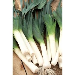 Porrulauk Janosik -  Allium porrum - Janosik - seemned