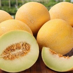 """Blewah """"Masala"""" - salah satu varietas terlezat yang tersedia di pasaran - 10 biji - Cucumis melo L."""