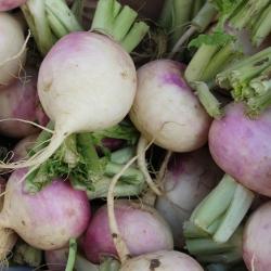 "Fodder turnip ""Rogowska"" - 10 g"