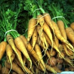 "Forage carrot ""Lobo"" - 200 g"
