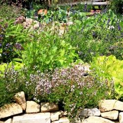Sääset ja puuke tõrjuv taimevalik -
