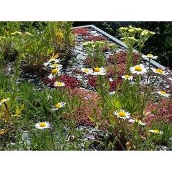 Katusetaimede valik - ühe- ja mitmeaastased taimed -