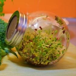 Jar sprouter - wadah penambah kecambah - 400 ml + HADIAH GRATIS -