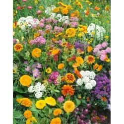 """Cracow square"" melliferous flower selection"