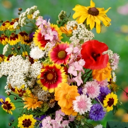 """""""Cracow square"""" tall flower variety mix"""