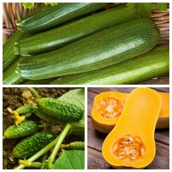 Огурец, кабачок (кабачок), кабачок - набор из 3-х овощных растений -  - семена