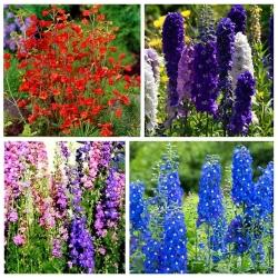 Larkspur - seeds of 4 flowering plants' varieties