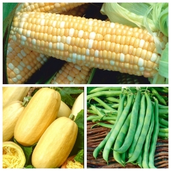 Vegetables for intercropping - Set no. 3 - seeds of 3 species