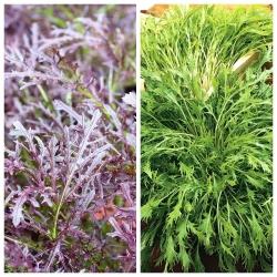 Mizuna - bộ hạt giống của 2 giống cây rau -