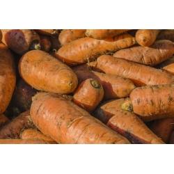 "Forage carrot ""Krystyna"" - 10 g"