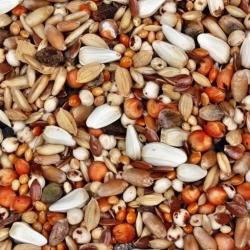 Pākšaugu lopbarības maisījums pēcnācējiem - 5 kg -  - sēklas