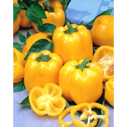 """Pepper """"Aphrodite"""" - yellow, block-type variety for field and under cover cultivation"""