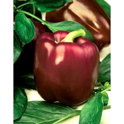 "Pepper ""Sweet Chocolate"" - sweet - 75 seeds"