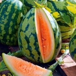 """Watermelon """"Orangeglo"""" - orange variety"""