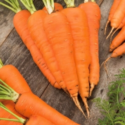 """Carrot """"Flakkese 2"""" - late variety"""