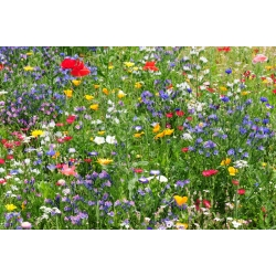 Mezcla de plantas melíferas silvestres - 500 gramos -