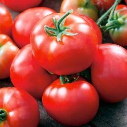 """Tomato """"Bruno F1"""" - nicely coloured, Baron-type variety for greenhouse cultivation"""
