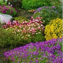 Kalmistu üheaastaste ja mitmeaastaste taimede valik -