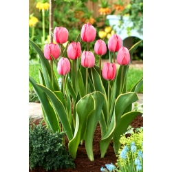 Tulip Design Impression - 5 pcs