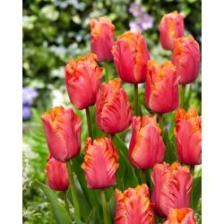 Тюльпан Amazing Parrot - 5 шт. -