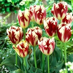 Тюльпан Grand Perfection - 5 шт. -