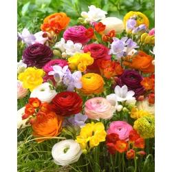 Buttercup un frēzija - dažādi krāsaini ziedoši augi - 100 gab -