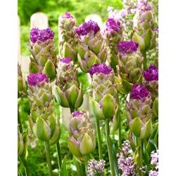 Tulipa Purple Tower - paquete de 5 piezas
