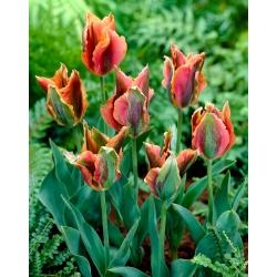 Tulip Artist - ¡paquete grande! - 50 pcs -