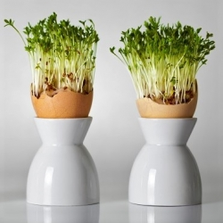 Happy Garden - Garden cress - yummy and good for the tummy - Seeds that Children Grow!