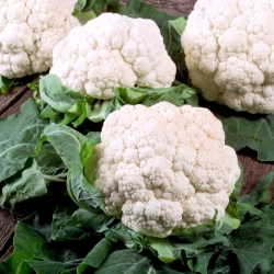 "Cauliflower ""Snowball X"" - medium late variety"