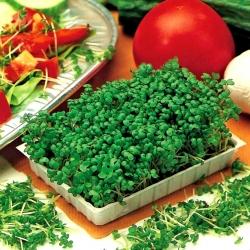 Semená klíčenia Švédov; rutabaga -