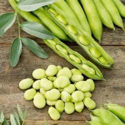 Broad bean Rambos