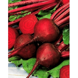 Red beetroot Ceryl