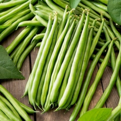 Green French bean Arkana