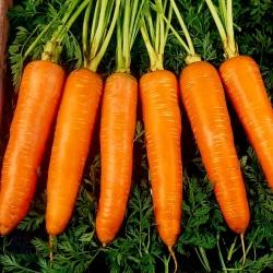 Carrot Flamanka - late variety