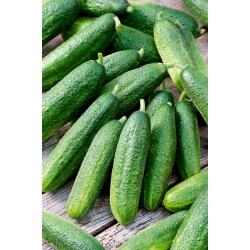 Field cucumber Polonez F1