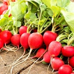 Radish Rota - Roma - red round roots