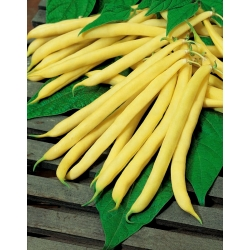 Dwarf yellow French bean Maxela
