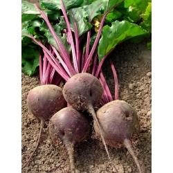 "Remolacha roja ""Red Ball"" (Czerwona Kula) - NANO-GRO - aumenta el volumen de cosecha en un 30% -"