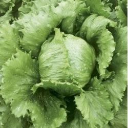 """Solata """"Kumak"""" - NANO-GRO - povečanje obsega pridelka za 30% -"""