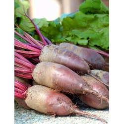 "Red beetroot ""Opolski"" - NANO-GRO - increase harvest volume by 30%"