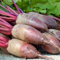 """Rdeča pesa """"Opolski"""" - NANO-GRO - povečanje obsega pridelka za 30% -"""
