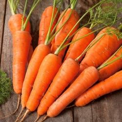 """Carrot """"Nantejska Polana"""" - a medium-early variety - PELLETED SEEDS"""