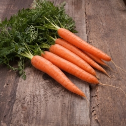 """Carrot """"Touchon"""" - a medium early variety that can be grown in pots"""